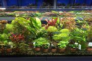 10 % Rabatt auf Wasserpflanzen